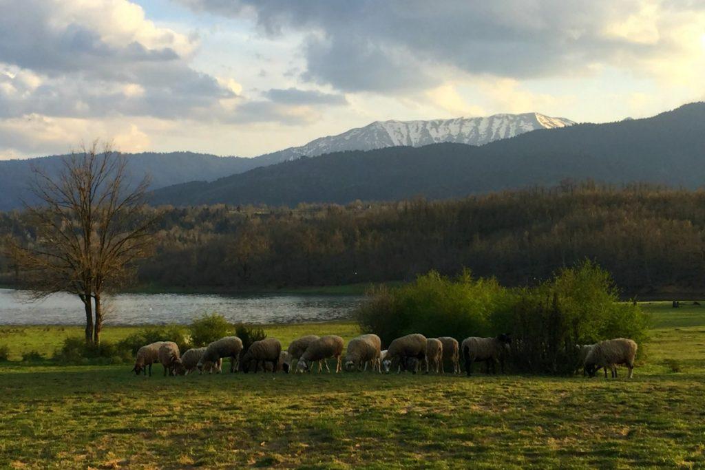 Horse Riding in Greece Lake Plastiras mygreecemytravels (17)