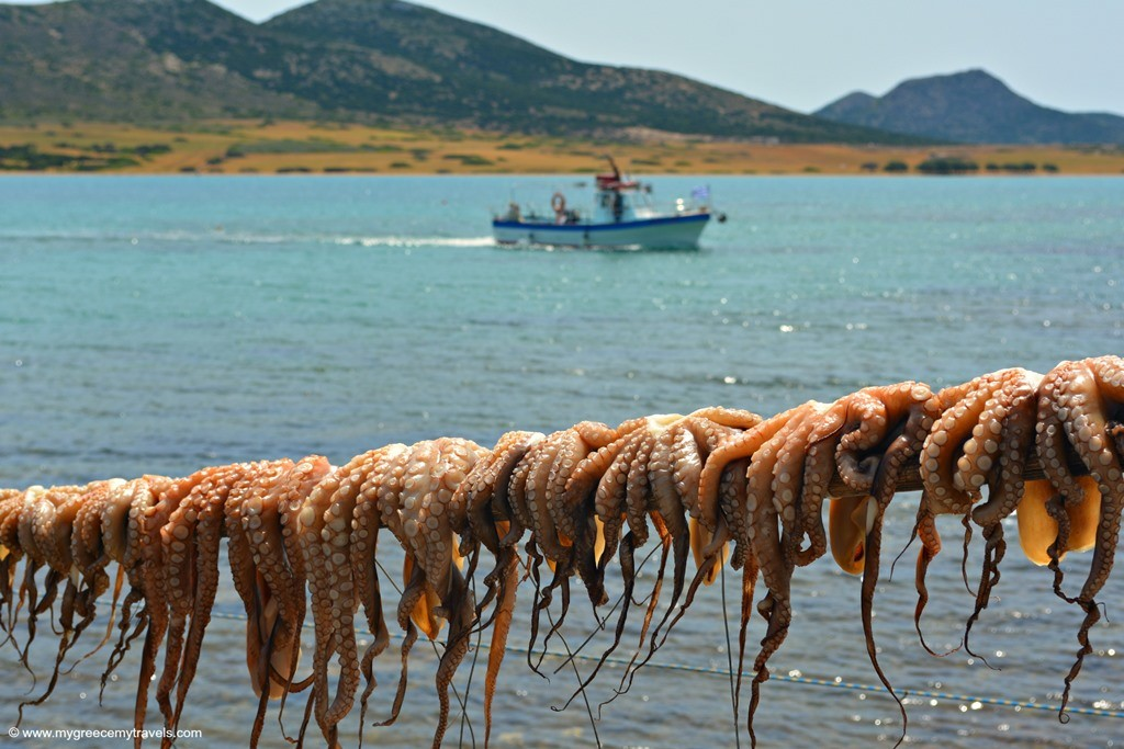 octopus drying in antiparos