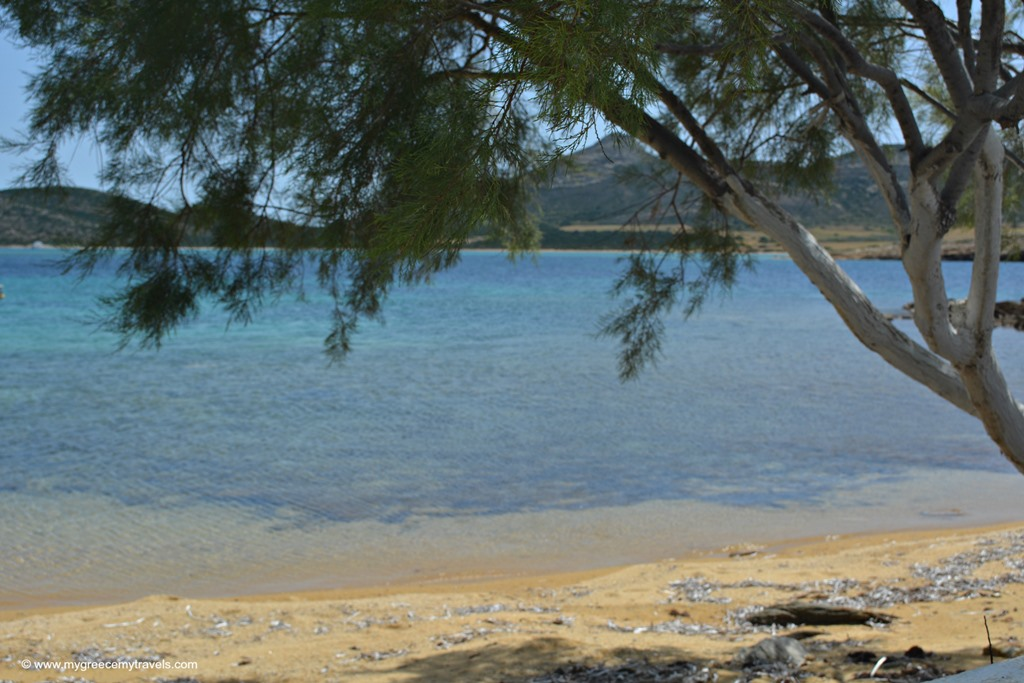 tree and sea in antiparos