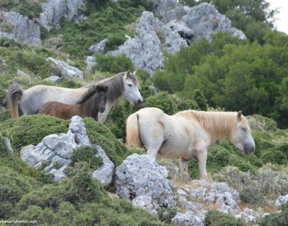 Among the Wild Horses of Kefalonia
