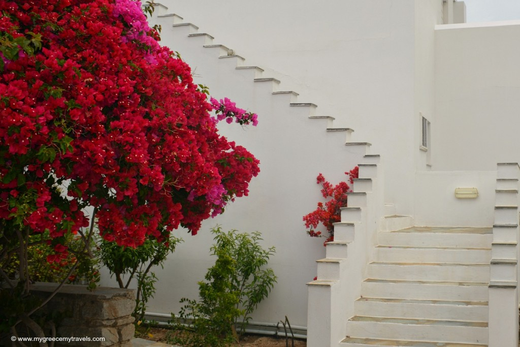 Bougainvillea and whitewashed walls.