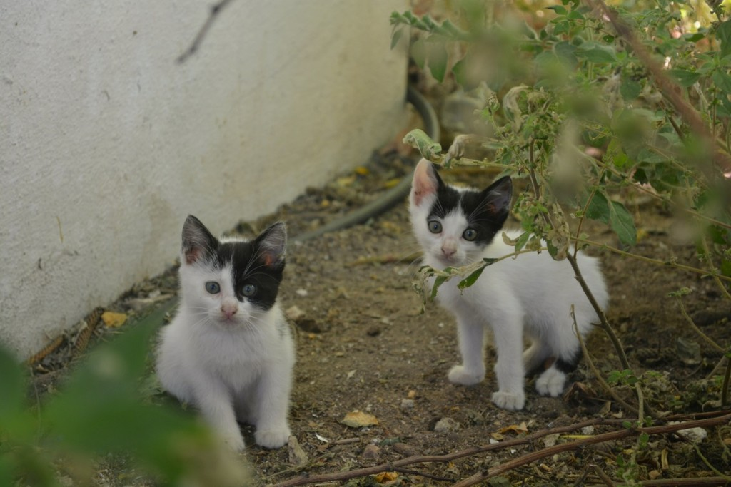Cutest kittens in Naxos.