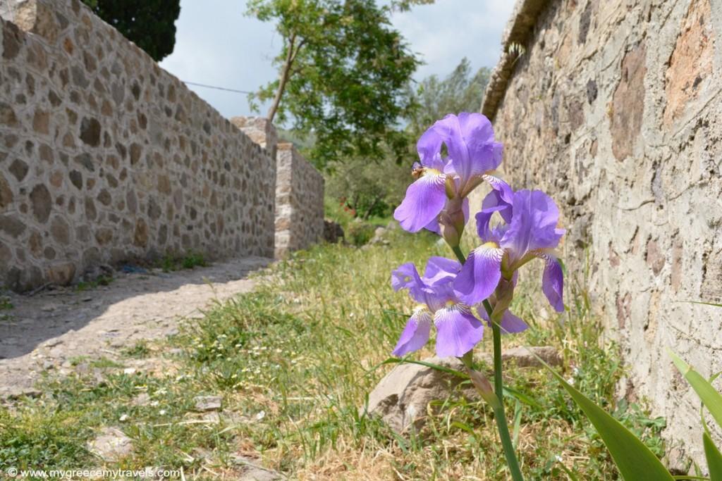 Jithra Lesbos mygreecemytravels (4)