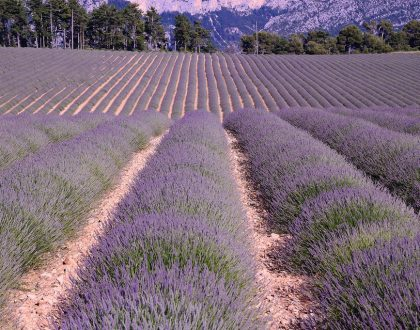 8 Reasons to Visit Provence